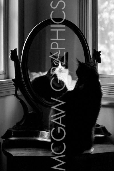 Reflection (Cat in Mirror) by Tom Artin