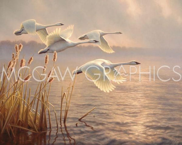 Elegant Migration by Greg Alexander