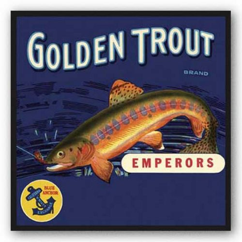 Golden Trout by Miles Graff Collection
