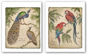 Macaw and Peafowls Set by Betty Whiteaker