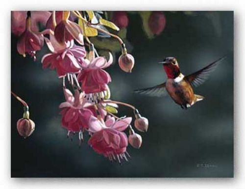 Hummingbird by Terry Isaac