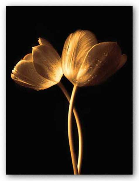 Illuminated Tulips I by Ilona Wellmann