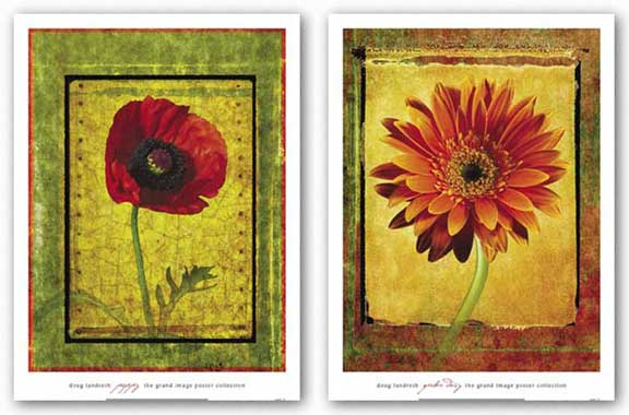 Gerber Daisy and Poppy Set by Doug Landreth