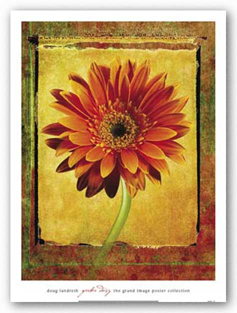 Gerber Daisy by Doug Landreth
