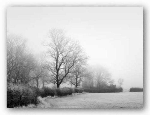 Misty Tree-Lined Field by Stephen Rutherford-Bate
