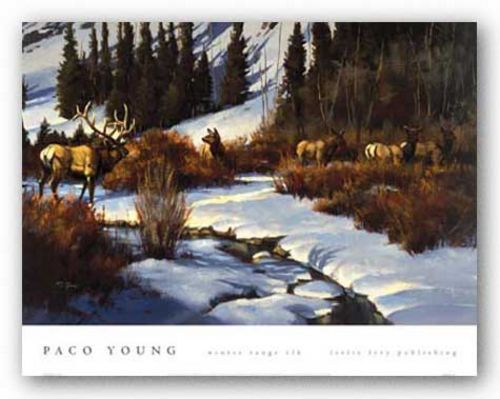 Winter Range Elk by Paco Young