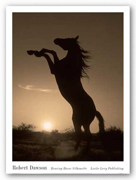 Rearing Horse Silhouette by Robert Dawson