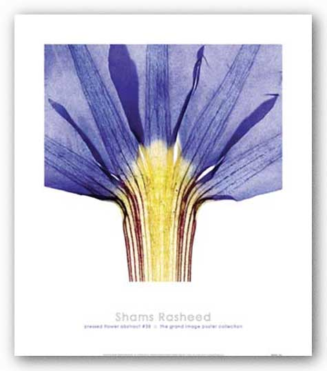 Pressed Flower Abstract #38 by Shams Rasheed