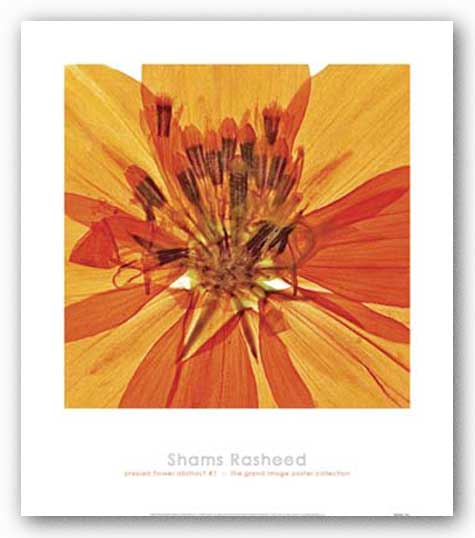 Pressed Flower Abstract #1 by Shams Rasheed