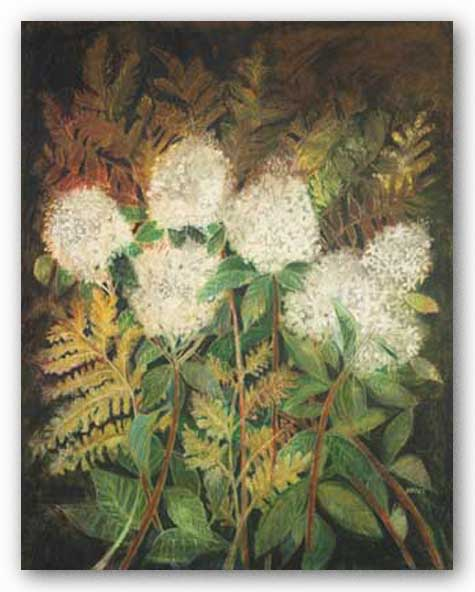 Hydrangeas and Ferns by Maret Hensick