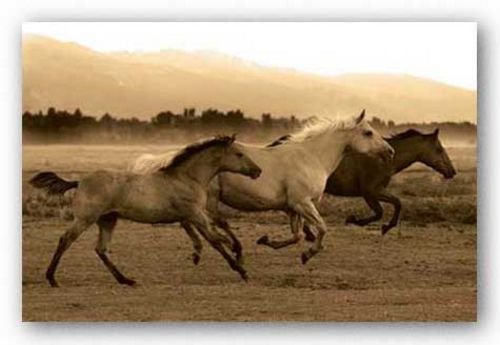 Horse Trio by Robert Dawson