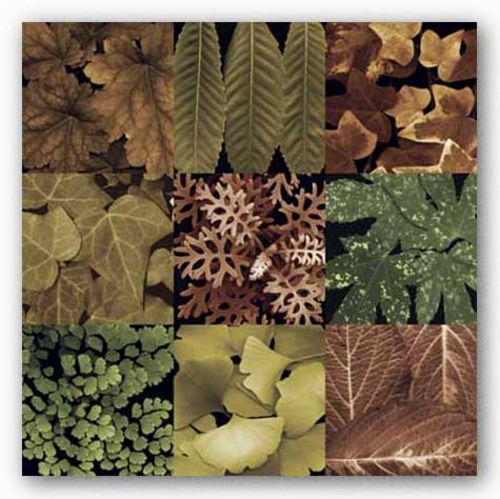 Leaf Montage by Tony Stuart