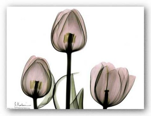 Trio of Tulips II by Albert Koetsier