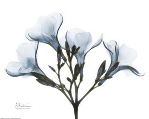 Blue Oleander by Albert Koetsier