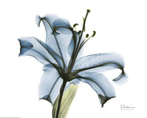 Blue Stargazer Lily by Albert Koetsier