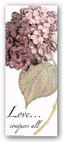 Words To Live By - Pink Hydrangea: Love by Marilu Windvand