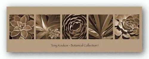 Botanical Collection I by Tony Koukos