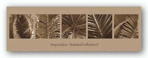 Botanical Collection II by Tony Koukos