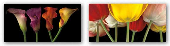Sunshine Tulips and Jewel Calla Lilies Set by Assaf Frank