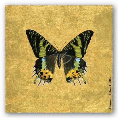 Butterfly on Gold by Joanna Charlotte