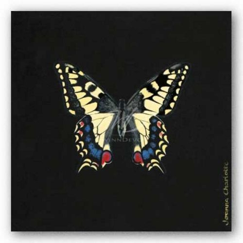 Butterfly on Black by Joanna Charlotte