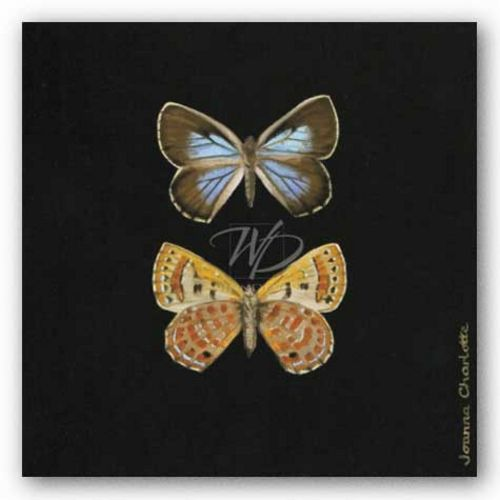 Pair of Butterflies on Black by Joanna Charlotte