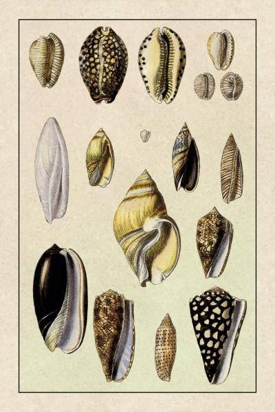 Shells: Convoltae and Orthocerata by G.B. Sowerby