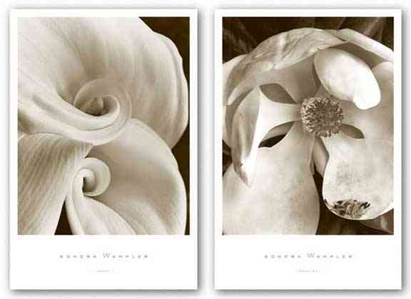 Magnolia No. 3 and Fleur No. 1 Set by Sondra Wampler
