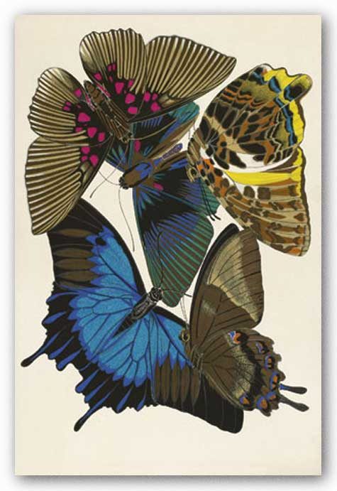 Collection I (Butterflies) by Winter Works