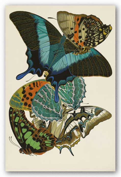 Collection III (Butterflies) by Winter Works