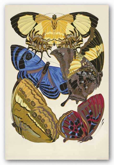 Collection IV (Butterflies) by Winter Works