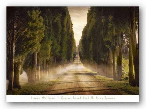 Cypress Lined Road II, Siena by Jimmy Williams