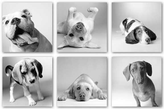 Solo Dogs Set (Six Prints) by Amanda Jones