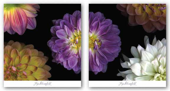 Purple Dahlia Set by Pip Bloomfield