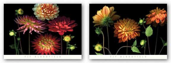 Dahlia Garden Set by Pip Bloomfield