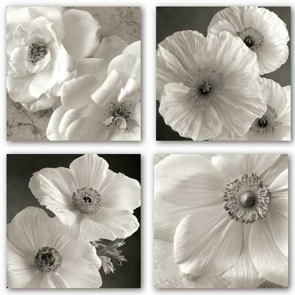 Poppy Study Set by Sondra Wampler