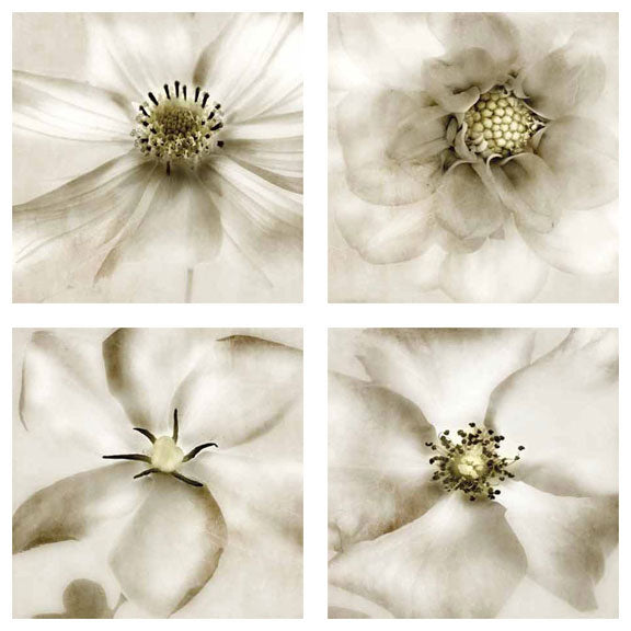 Whisper of Flowers Set (Four Prints) by Donna Geissler
