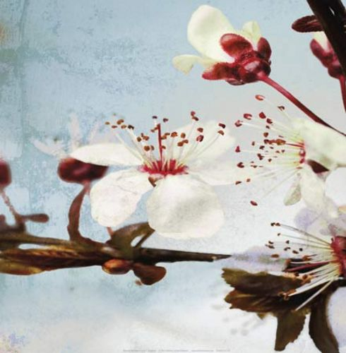Blossom Morning III by A.F. Duealberi