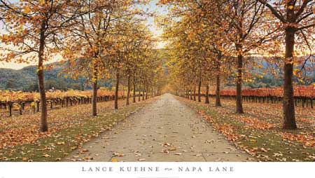 Napa Lane by Lance Kuehne