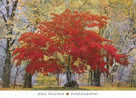 Cascade Fall Colors by Don Paulson
