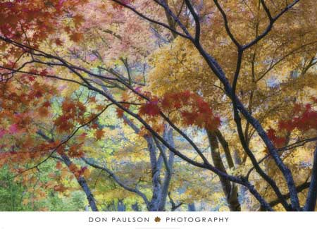 Lithia Park Fall 3 by Don Paulson