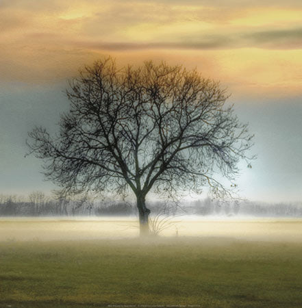 Misty Silhouette by Steven Mitchell