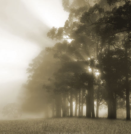 Misty Forest by Steven Mitchell