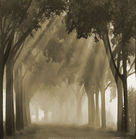 Misty Grove by Steven Mitchell