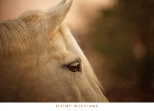 Insight by Jimmy Williams