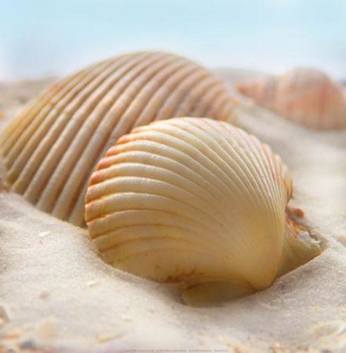 Beachy Shell I by Donna Geissler