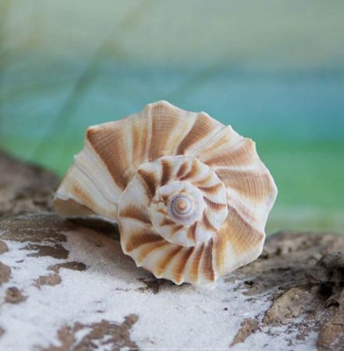 Shell and Driftwood I by Donna Geissler