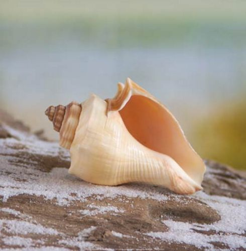 Shell and Driftwood IV by Donna Geissler