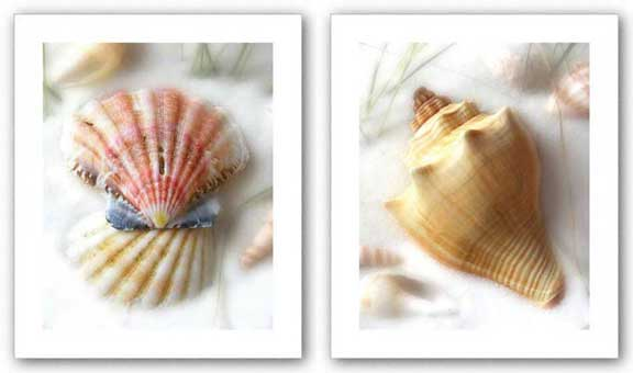 Sand and Shells II and VI Set by Donna Geissler