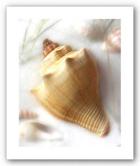 Sand and Shells VI (Conch) by Donna Geissler